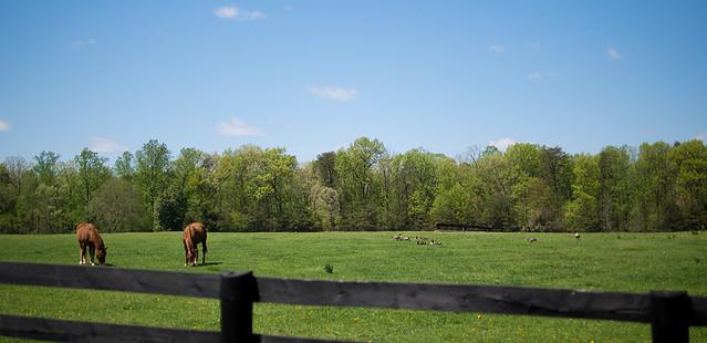 Meadowood Horses