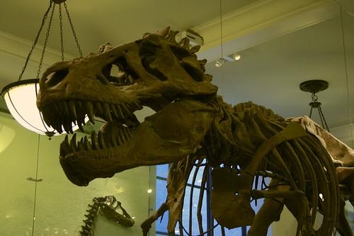 4.20 T-Rex Fossil