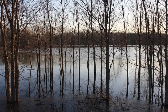 minesing wetlands