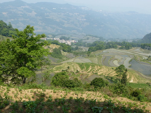 Yunnan13-Yuanyang 10-Luomadian (2)