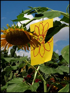 Construction Paper sunflower