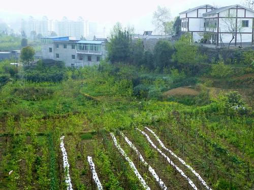 Chongqing13-Zunyi-Chongqing-bus (2)
