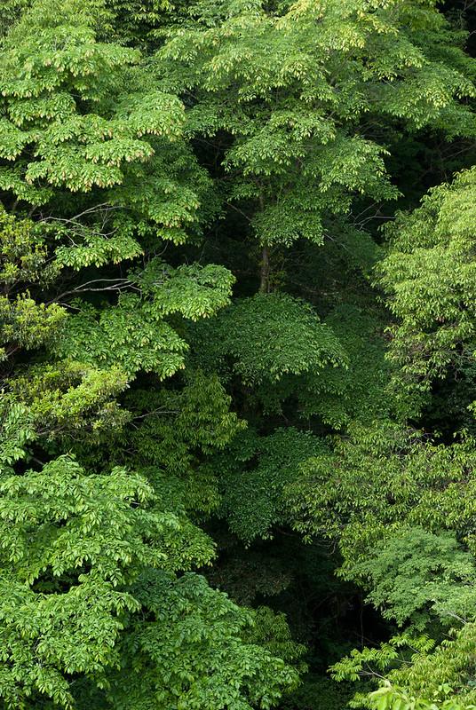 緑green