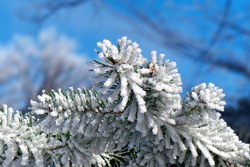 sky snow canada macro closeup lumix day winnipeg hoarfrost manitoba explore 1000views cans2s fz200