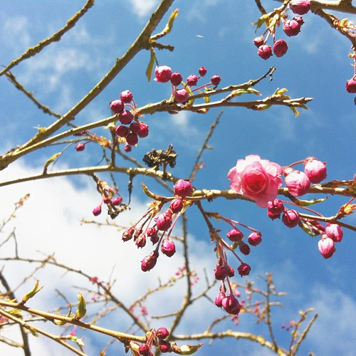 #springishere