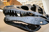 Allosaurus Skelton Head