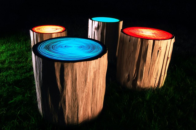 Tree Rings by Judson Beaumont