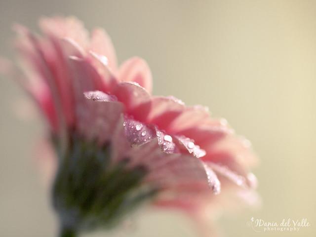 my pink love...
