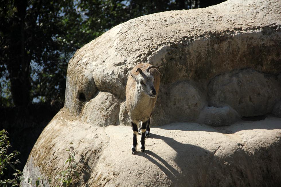 Himalayan Zoo