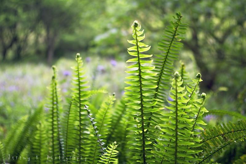 徜徉自然的寧靜~福山植物園
