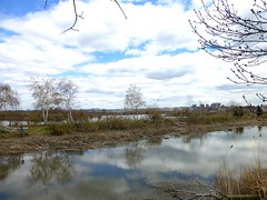 The Meadowlands NJ