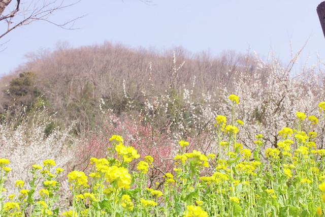幕山_15