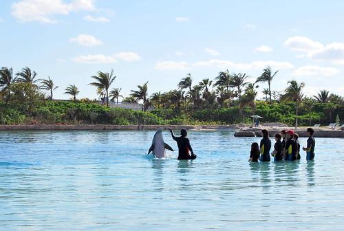 dolphin1-001