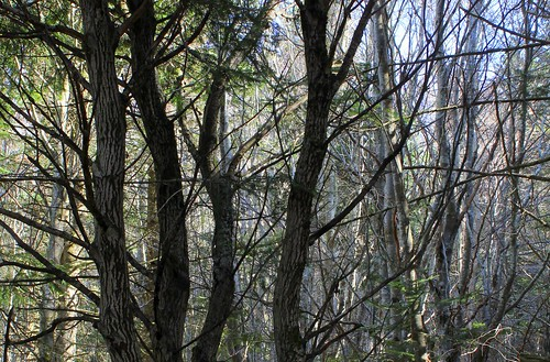 Hêtraie sapinière des Monts Breysse- 43 (6)