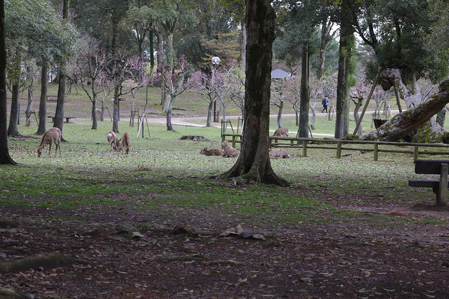 1053 - Nara