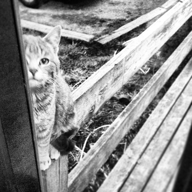 {diagonal} #cmglimpse #cmig365apr #barncat