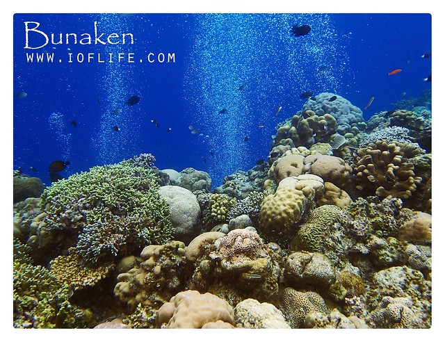 Bubble bunaken
