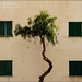 Urban Tree by ScudMonkey