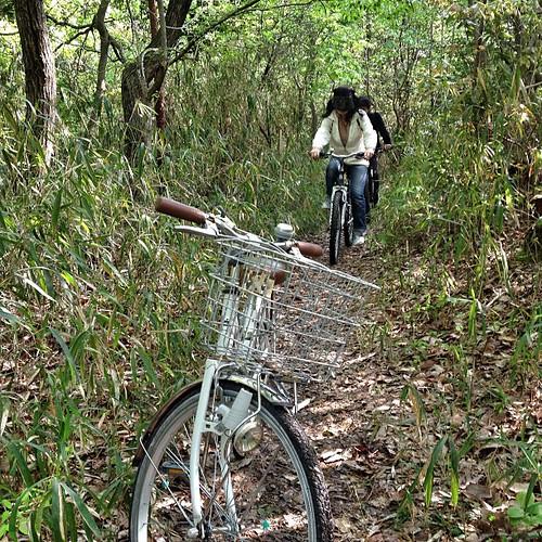 ママチャリで林道サイクリング。