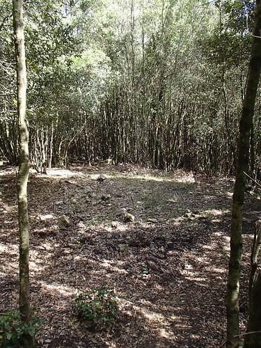 Charcoal Burn Site