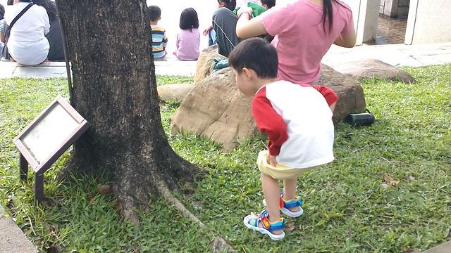 專心看著樹上的毛毛蟲