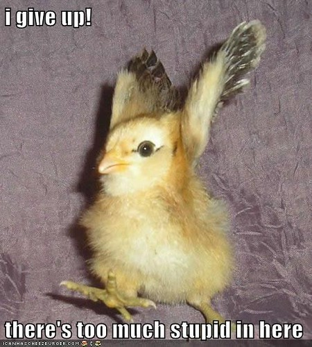 lol so much stupid exasperated chick