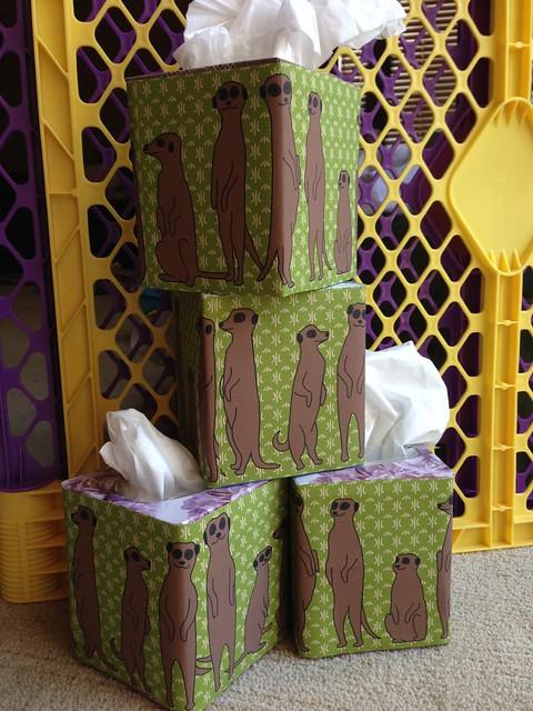 Meerkat Kleenex boxes