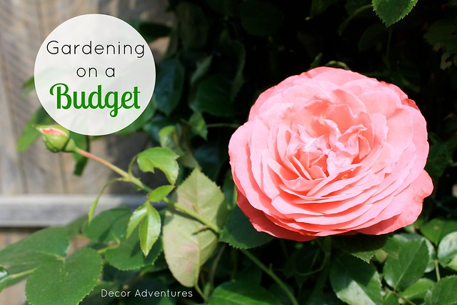 Gardening on a Budget from Making Lemonade