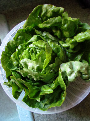 Boston Bibb Lettuce for Fajita Wraps