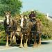 Amish corn wagon-9642 by Rodney Preisch