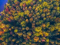 Autumn Colors | Kaunas aerial