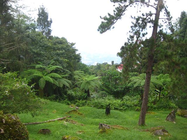 Taiping Maxwell Hill IMG_5830