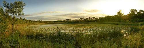 panorama lake green landscape puddle pond nsw alpha westernsydney chippingnorton sonyalpha newbridgeroad westernsydeny