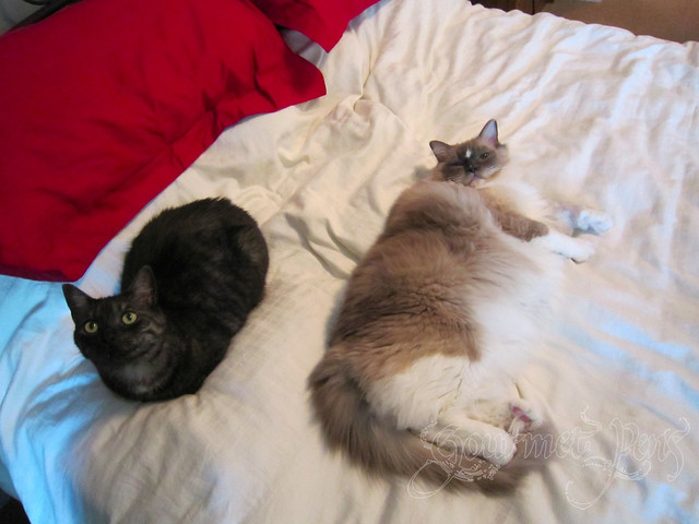 Angel & Tyco Hanging Out on The Bed
