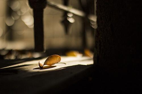 8/52 - Otoño silencioso - Silent Autumn by Carola Lagomarsino