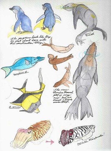4.13.12 - New England Aquarium Studies
