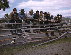 Seminole Cattlemen with branding irons during a round-up: Big Cypress Reservation, Florida