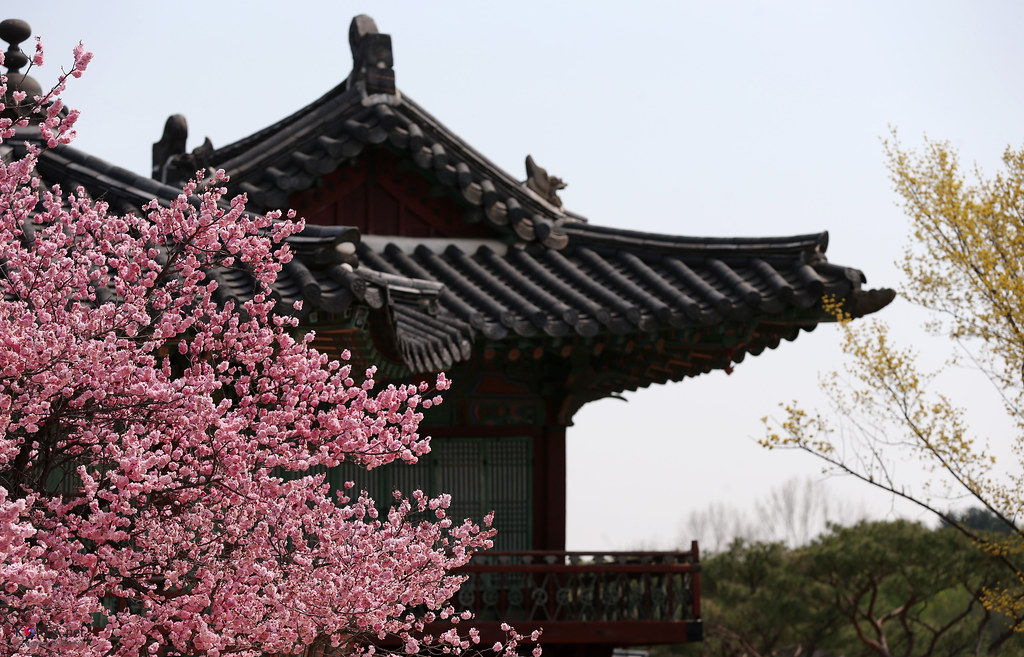 Korea_Palace_Spring_Flowers_10