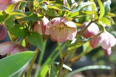 spring flowers 055
