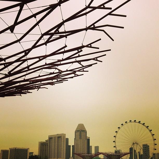 Perched high-up. Hope everyone is enjoying their weekend! Dear haze...shoo shoo away!