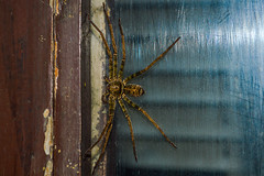 Arachnophobia (Explore #437 - 20th April 2013)