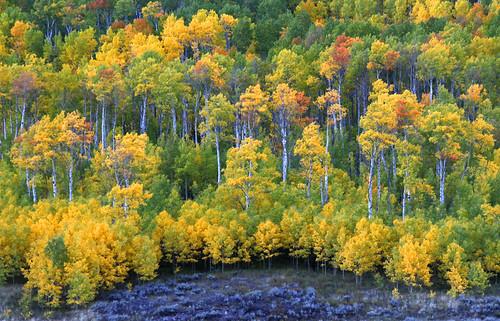 Under the Castles, West Elk Mountains, Colorado, Autumn 2011