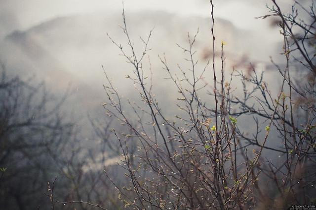 IMG_7821 Misty Mountain