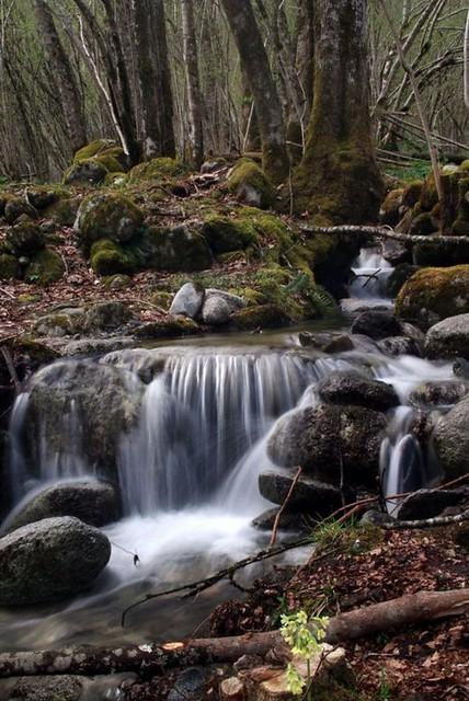 Ruisseau (Aulus-les-Bains/Ariège)