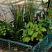 Plant Sale: April 28, 2013