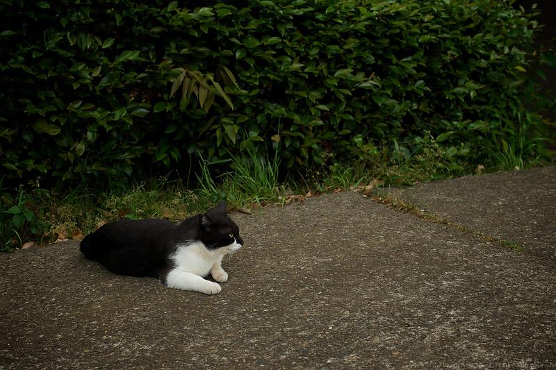 stray cat #1