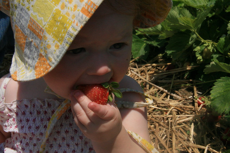 strawberry pickin'