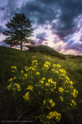 flowers sunset colorado colorful vibrant vivid professional rockymountains wildflowers frontrange exciting intersting tylerporter