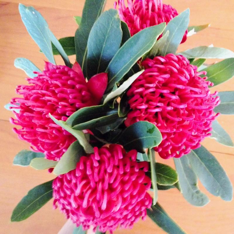 Snapshots // October 13 ~ market flowers