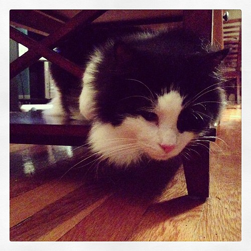 #fmsphotoaday October 12 - Below. Felix loves to hang out below the coffee table! #catsofinstagram